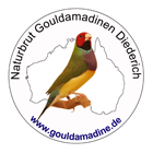 Naturbrut Gouldamadinen Diederich